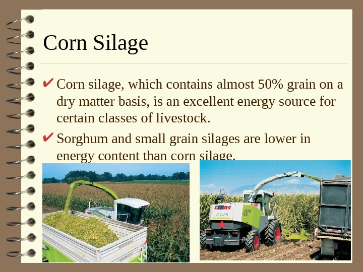 Corn Silage Corn silage, which contains almost 50 grain on a dry matter basis,