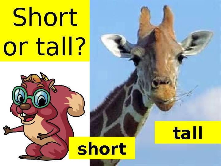 Short or tall? tall short