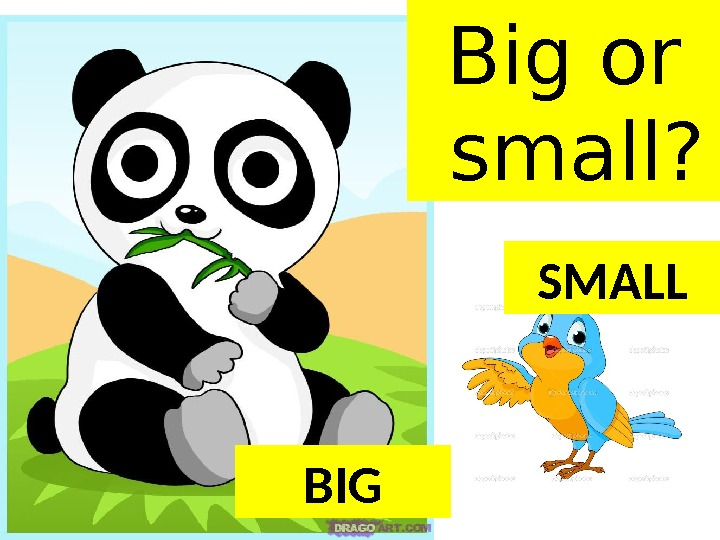 BIG SMALLBig or small?