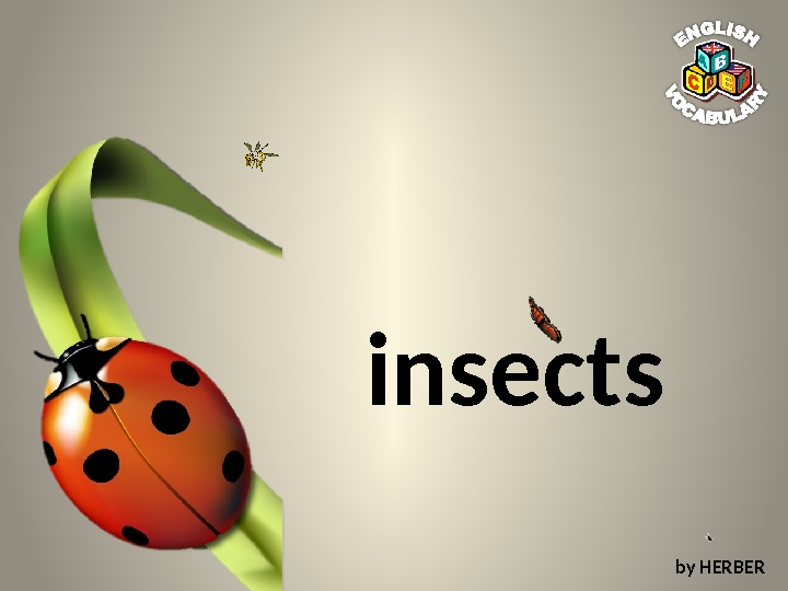 insects by HERBER