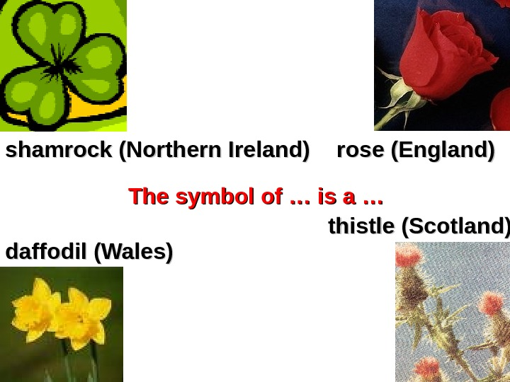 shamrock (Northern Ireland) rose (England) daffodil (Wales) thistle (Scotland)The symbol of … is a …