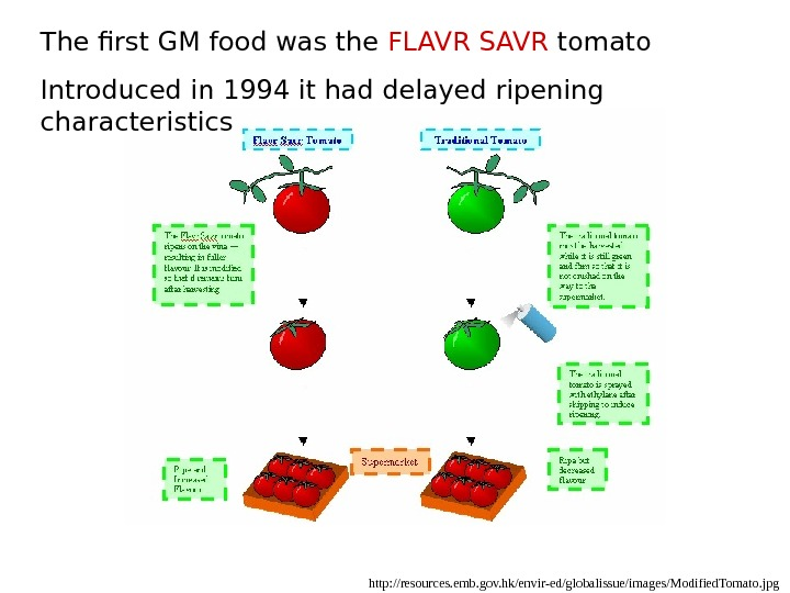 http: //resources. emb. gov. hk/envir-ed/globalissue/images/Modified. Tomato. jpg. The first GM food was the FLAVR