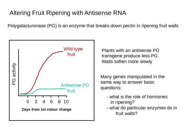 Polygalacturonase (PG) is an enzyme that breaks down pectin in ripening fruit walls  Plants