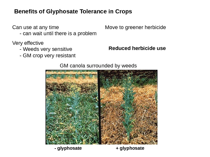 Move to greener herbicide Benefits of Glyphosate Tolerance in Crops  Can use at any