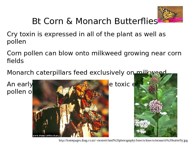 Bt Corn & Monarch Butterflies Cry toxin is expressed in all of the plant