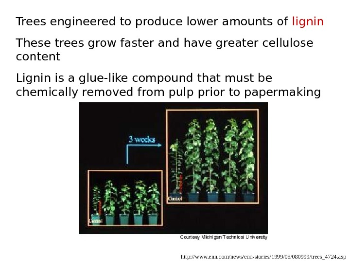 http: //www. enn. com/news/enn-stories/1999/08/080999/trees_4724. asp. Trees engineered to produce lower amounts of lignin These