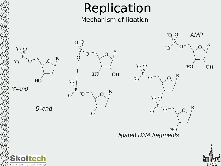 1 7 5 5 Replication Mechanism of ligation O A O HH OOP O-