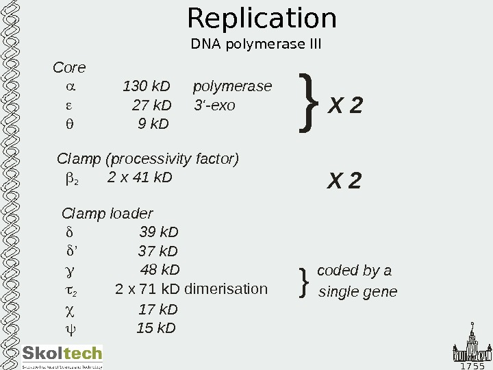1 7 5 5 Replication DNA polymerase III   Core
