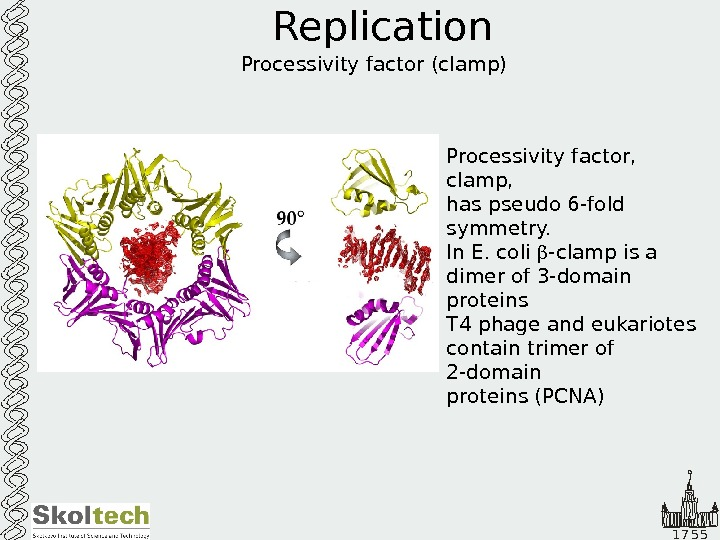 1 7 5 5 Replication Processivity factor (clamp) Processivity factor,  clamp, has pseudo