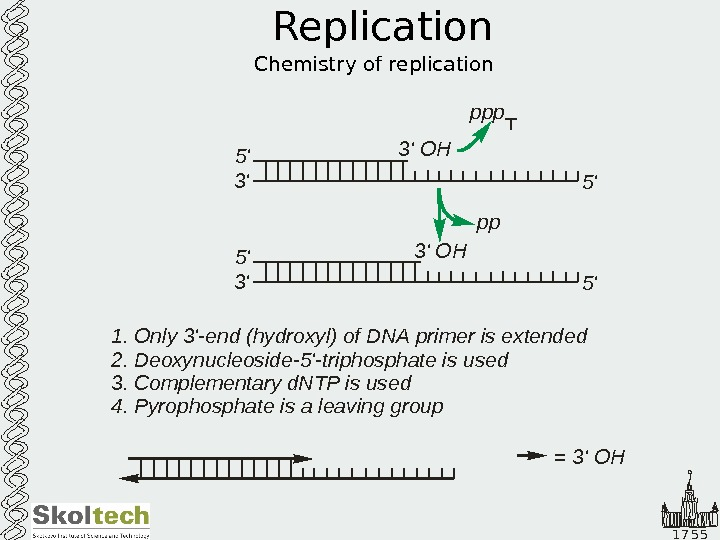 1 7 5 5 Replication Chemistry of replication 5' 3' OH ppp 5' 3'
