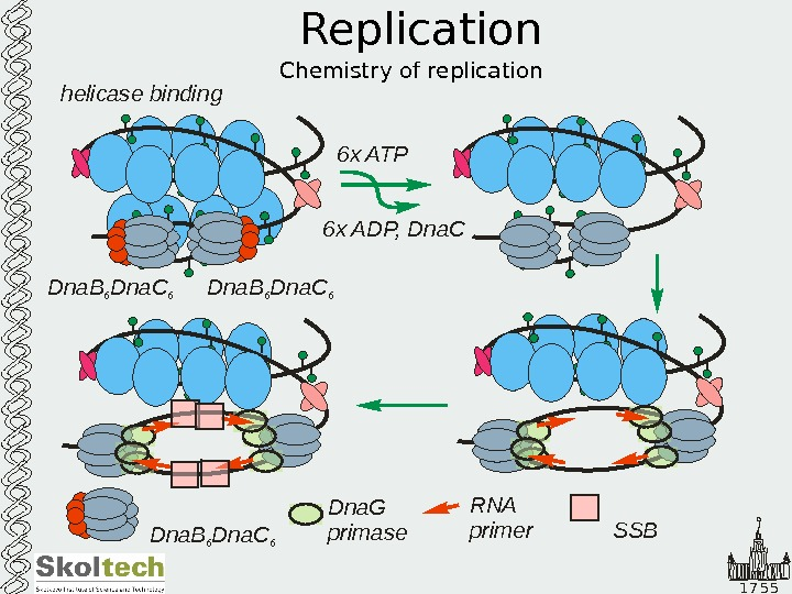 1 7 5 5 Replication Chemistry of replication. Dna. B Dna. C 6 6