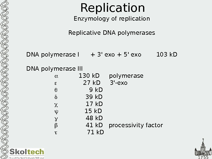 1 7 5 5 Replication Enzymology of replication Replicative DNA polymerases DNA polymerase I