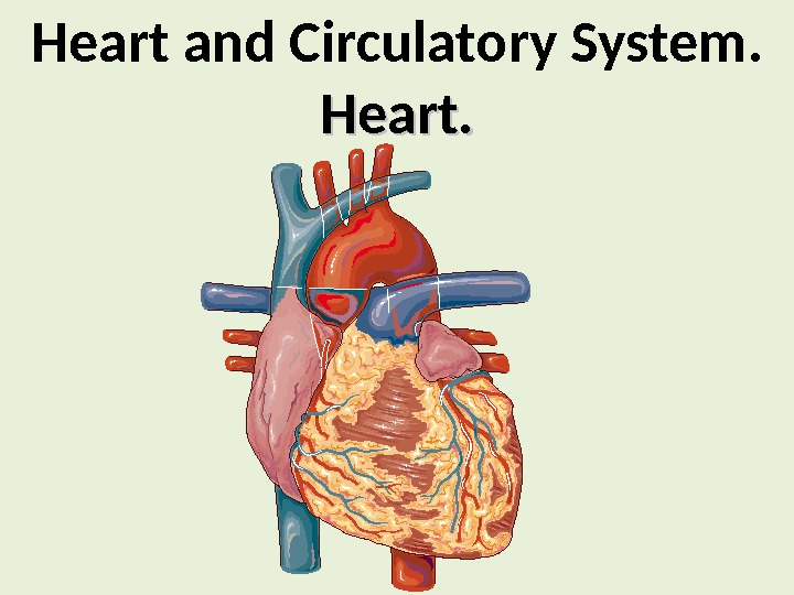 Heart and Circulatory System. Heart.