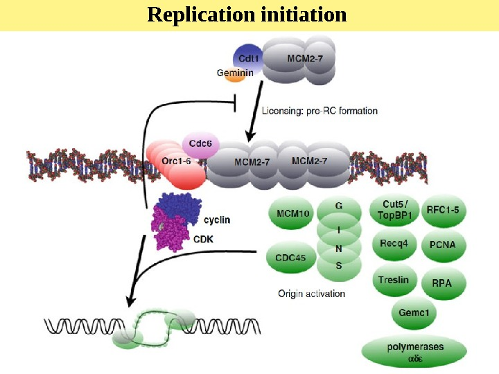 Replication initiation