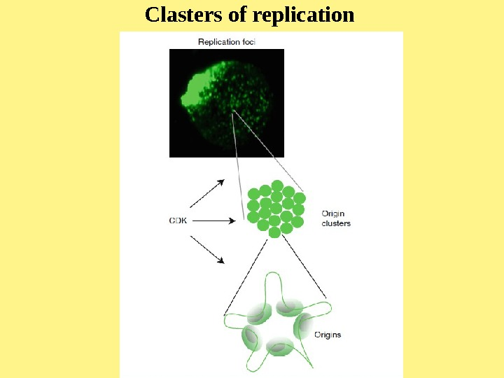 Clasters of replication
