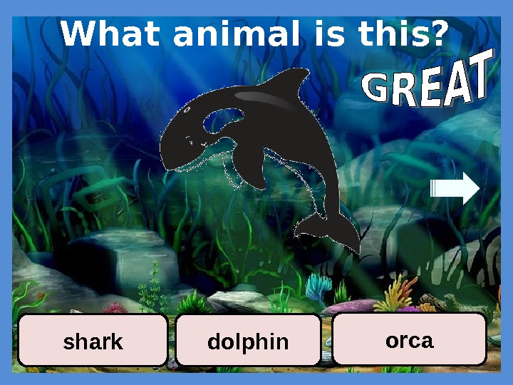What animal is this? dolphin orca shark