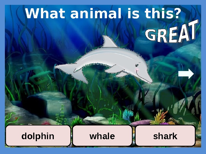 What animal is this? whaledolphin shark