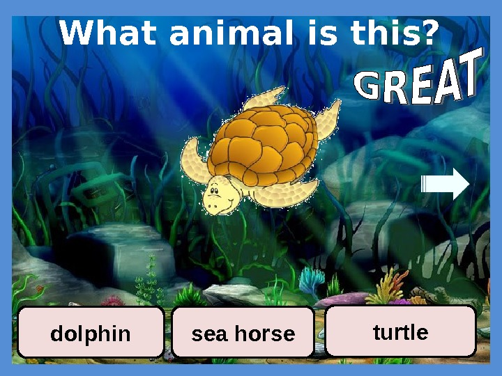 What animal is this? sea horse turtle dolphin