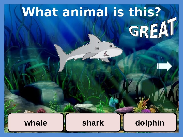 What animal is this? whale shark dolphin