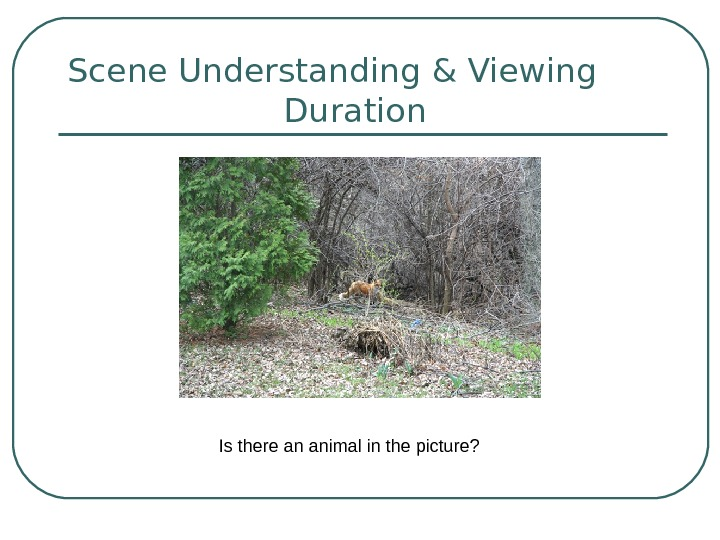Scene Understanding & Viewing   Duration   Is there an animal in the picture?