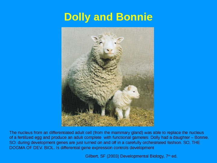 Dolly and Bonnie Gilbert, SF (2003) Developmental Biology, 7 th ed. The nucleus from an differentiated