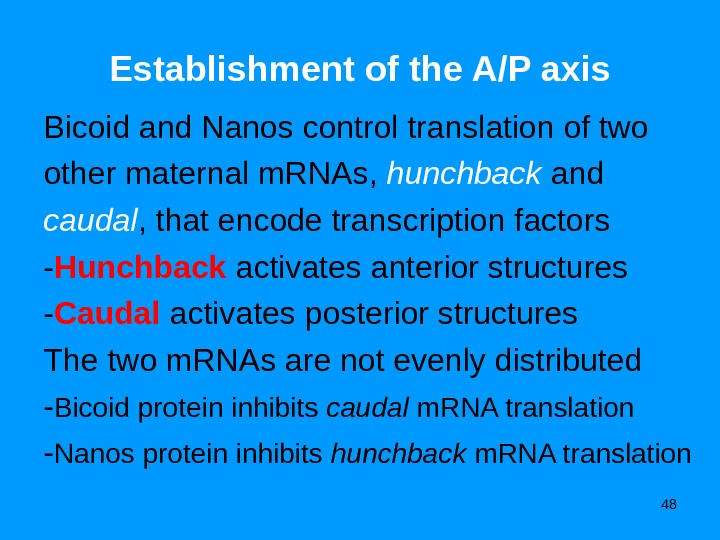 48 Establishment of the A/P axis Bicoid and Nanos control translation of two other maternal m.