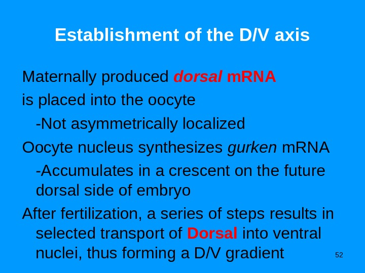 52 Establishment of the D/V axis Maternally produced dorsal m. RNA  is placed into the
