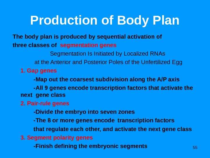 55 Production of Body Plan The body plan is produced by sequential activation of three classes