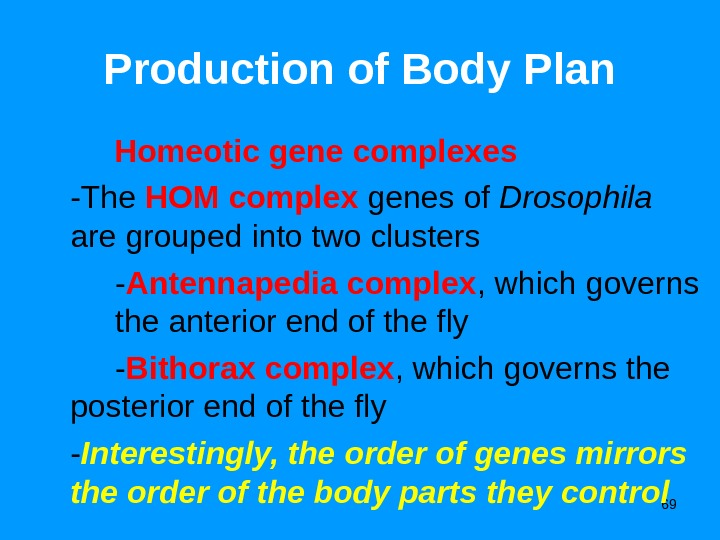 69 Production of Body Plan   Homeotic gene complexes -The HOM complex genes of Drosophila