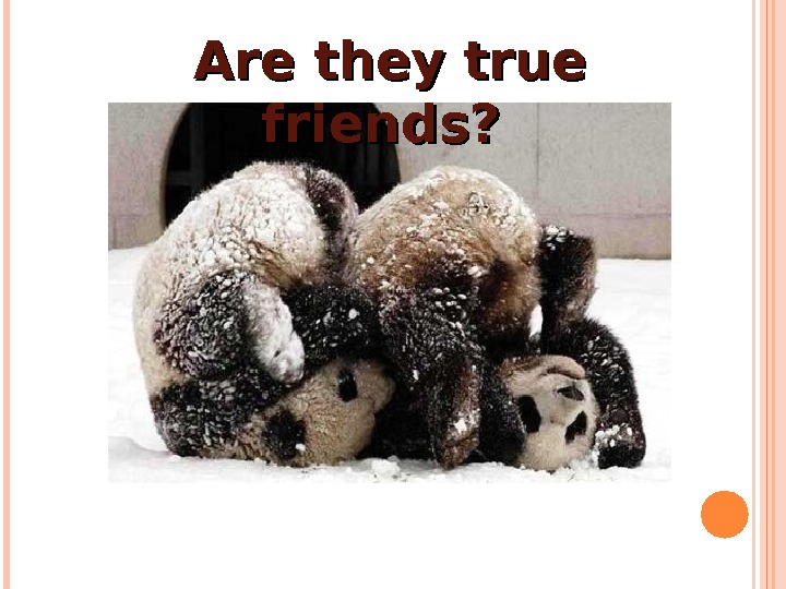 Are they true friends?