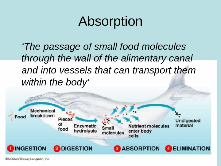 Absorption ' The passage of small food molecules through the wall of the alimentary