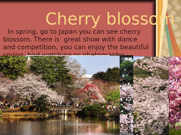 Cherry blossom   In spring ,  go to Japan you can see