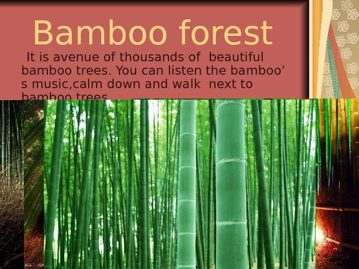B amboo forest  It is a venue of thousands of  beautiful bamboo