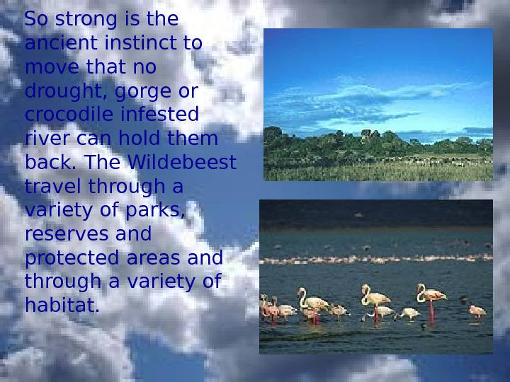 So strong is the ancient instinct to move that no drought, gorge or crocodile