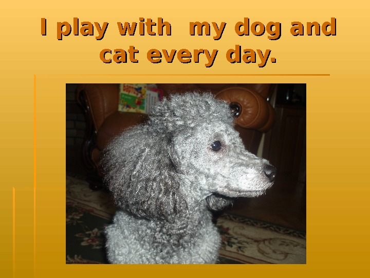 I play with my dog and cat every day.