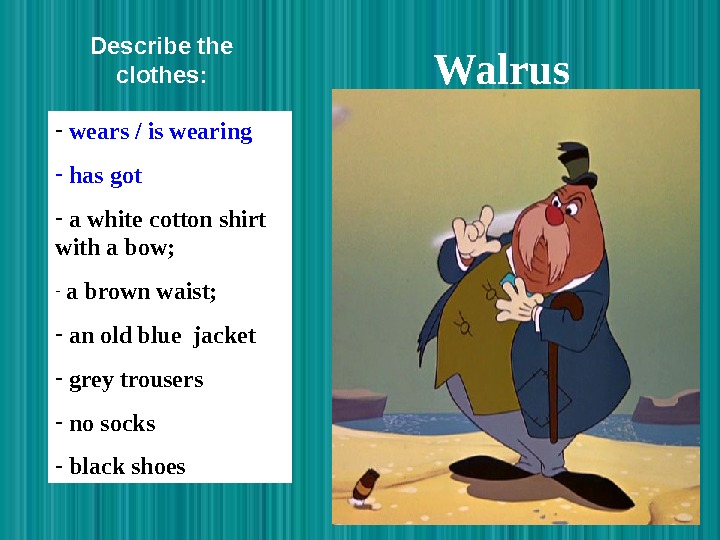 Walrus  -  wears / is wearing -  has got -