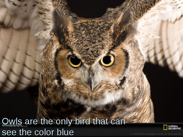 Owls are the only bird that can see the color blue