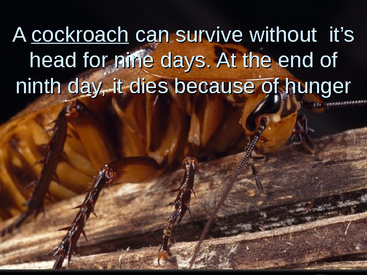 A A cockroach can survive without it's head for nine days. At the end