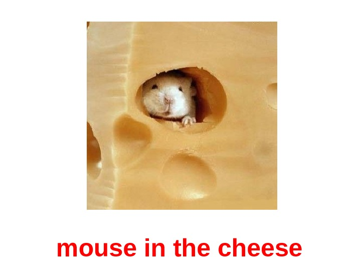 mouse in the cheese