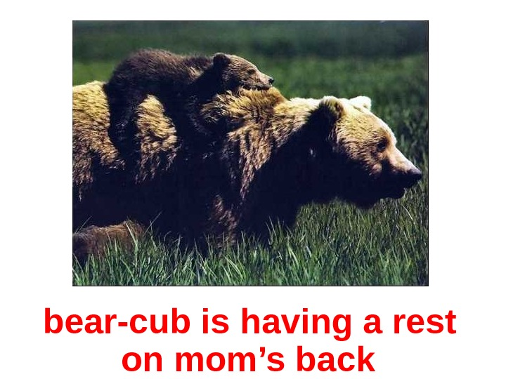 bear-cub is having a rest  on mom's back