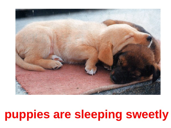 puppies are sleeping sweetly