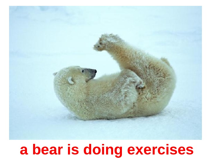 a bear is doing exercises