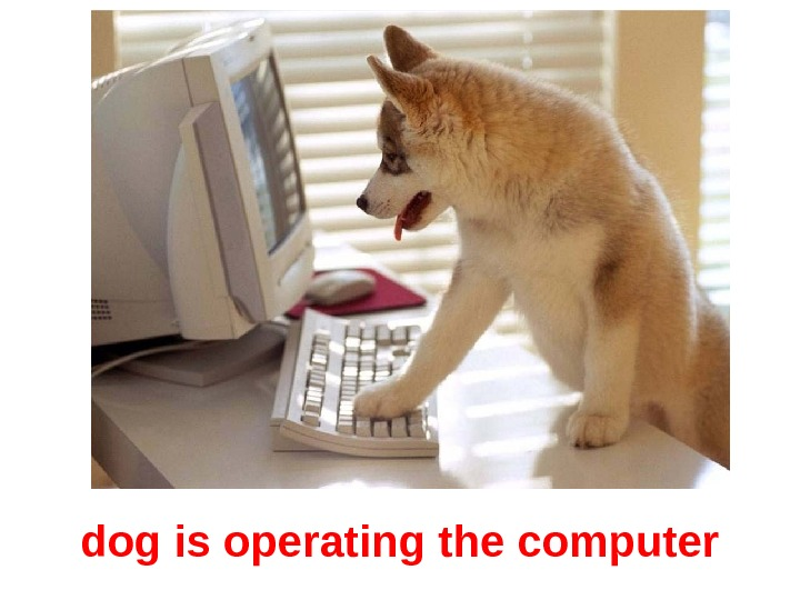 dog is operating the computer