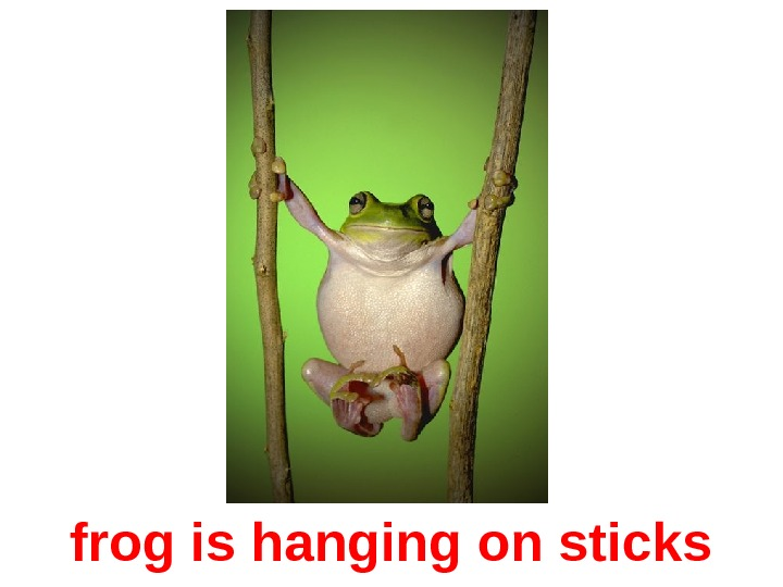 frog is hanging on sticks