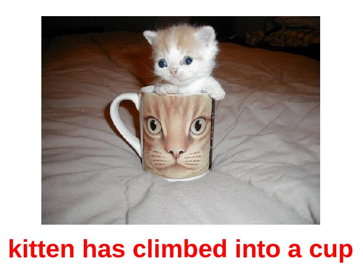 kitten has climbed into a cup