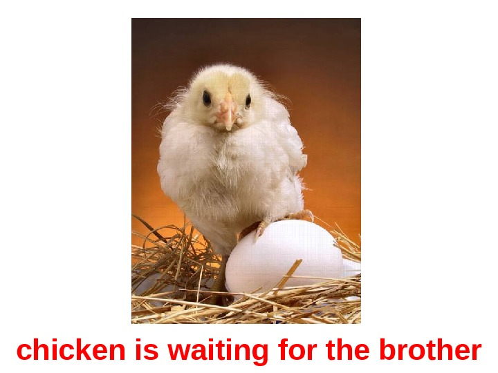 chicken is waiting for the brother
