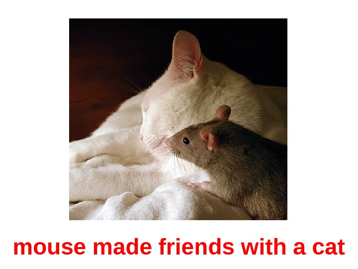 mouse made friends with a cat