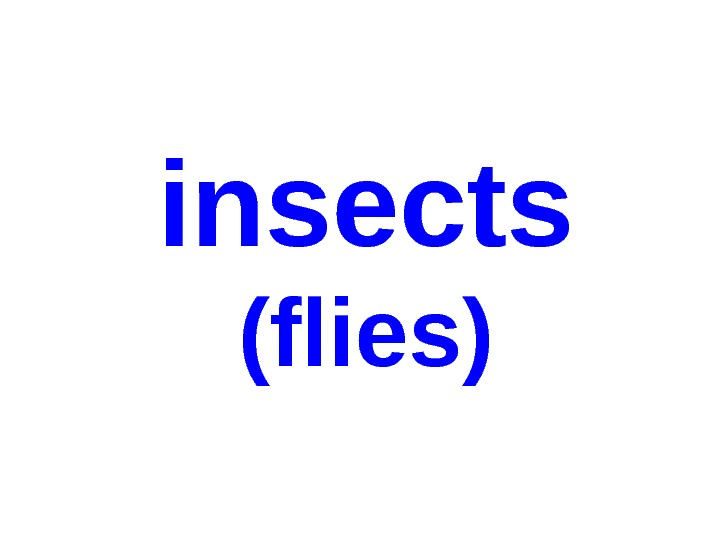 insects ( flies )