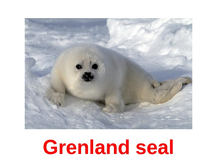 Grenland seal