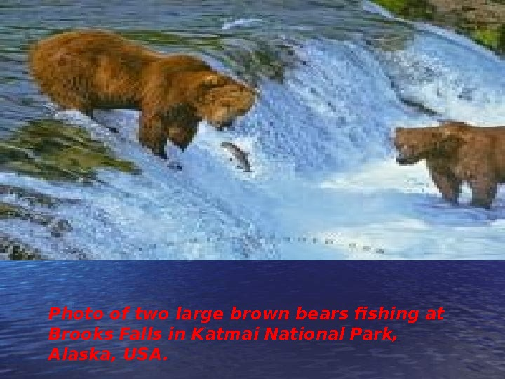 Photo of two large brown bears fishing at Brooks Falls in Katmai National Park,  Alaska,